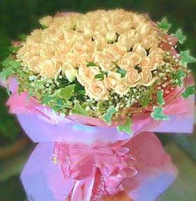 99朵香槟玫瑰/迷恋你