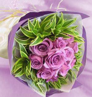 11朵紫玫瑰/一见钟情