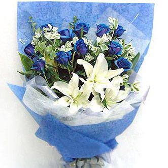 11朵蓝玫瑰/梦想