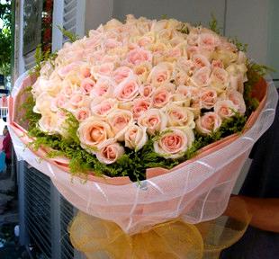 66朵玫瑰/钟情于你