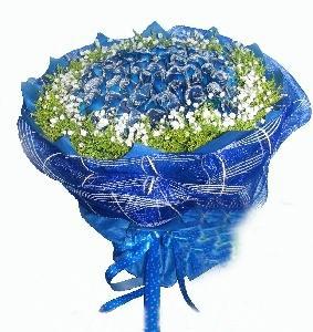 99朵蓝玫瑰/今生的唯一