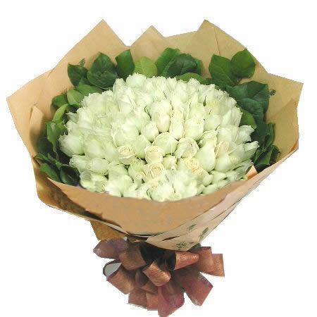 99朵白玫瑰/������