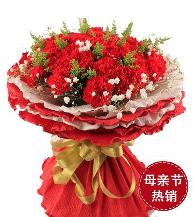 33朵康乃馨/温暖的怀抱